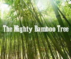 Learn From Chinese Bamboo Tree